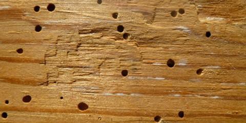 Aangetast hout
