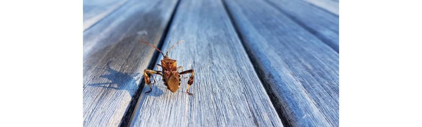 Tegen insecten en houtzwammen